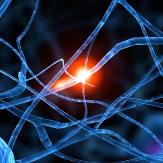 Campos electromagnéticos y Salud Pública